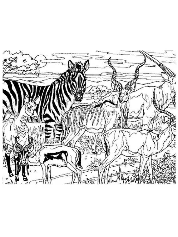Animali animali della savana da stampare e colorare for Disegni della roma da colorare