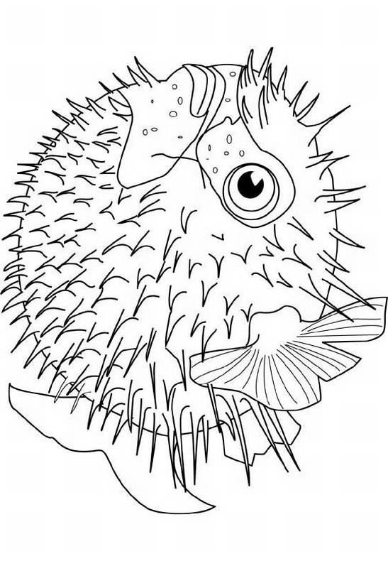 Disegni da colorare di animali for Disegno pesce palla