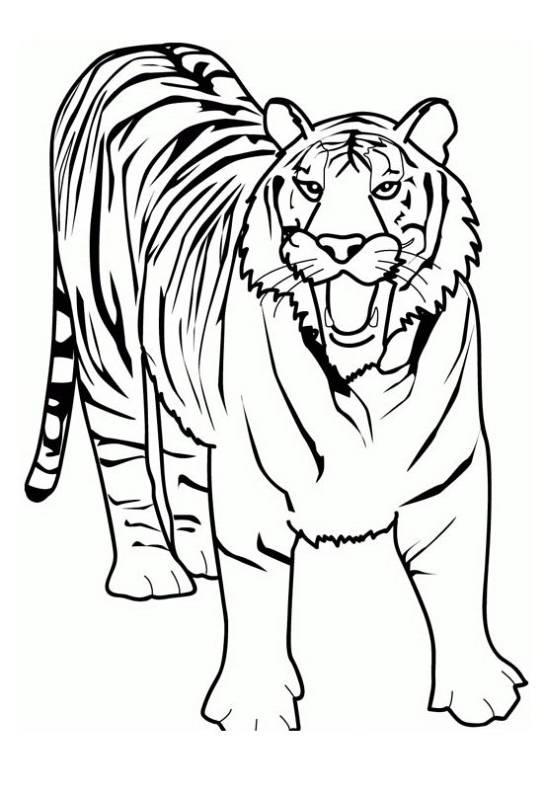 animali tigre da stampare e colorare