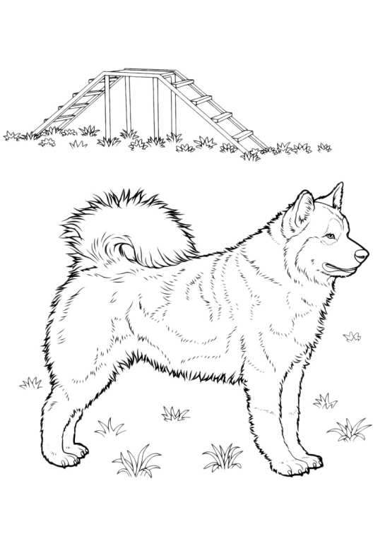 Cani Da Colorare Alaskan Malamute Da Stampare E Colorare