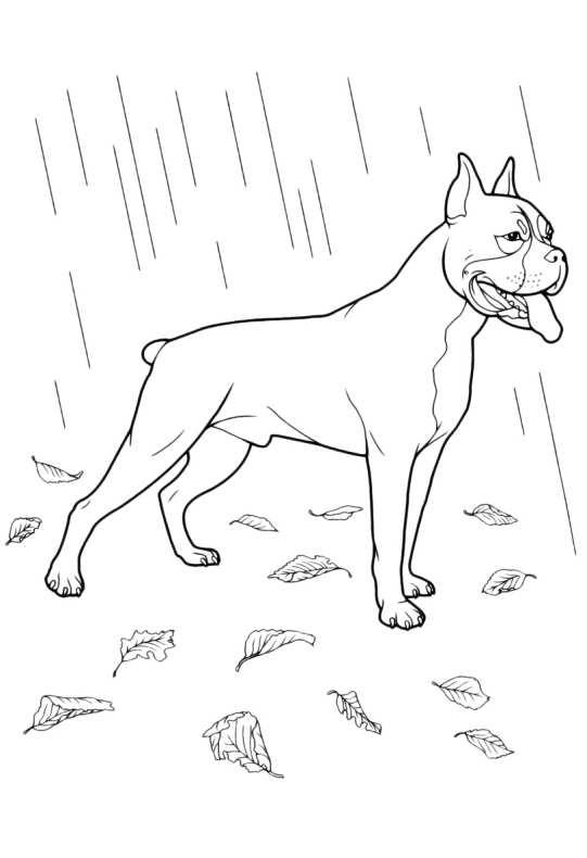 Cani da colorare boxer da stampare e colorare for Cane disegno da colorare