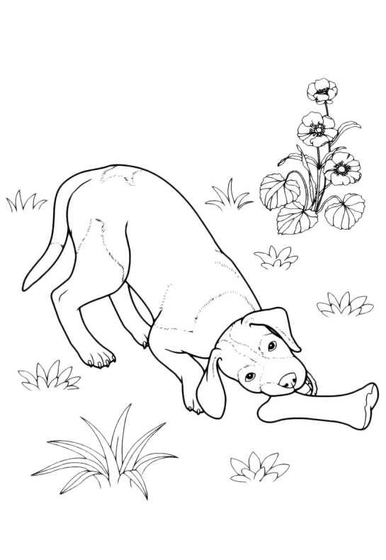 Cani Da Colorare Cane Con Osso Da Stampare E Colorare