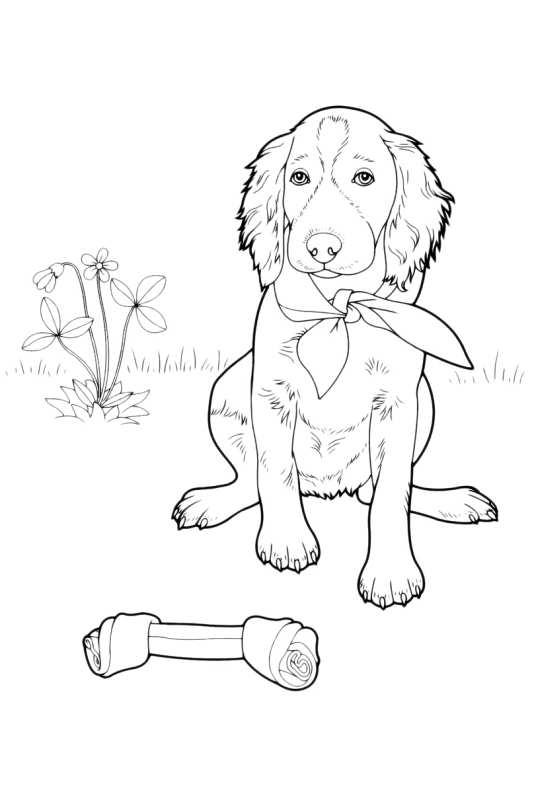 Disegni da colorare di cani - Libero compleanno da colorare pagine da colorare ...