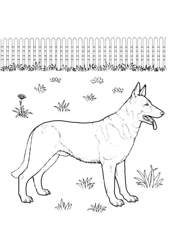 Disegni da colorare di cani - Animale domestico da colorare pagine gratis ...