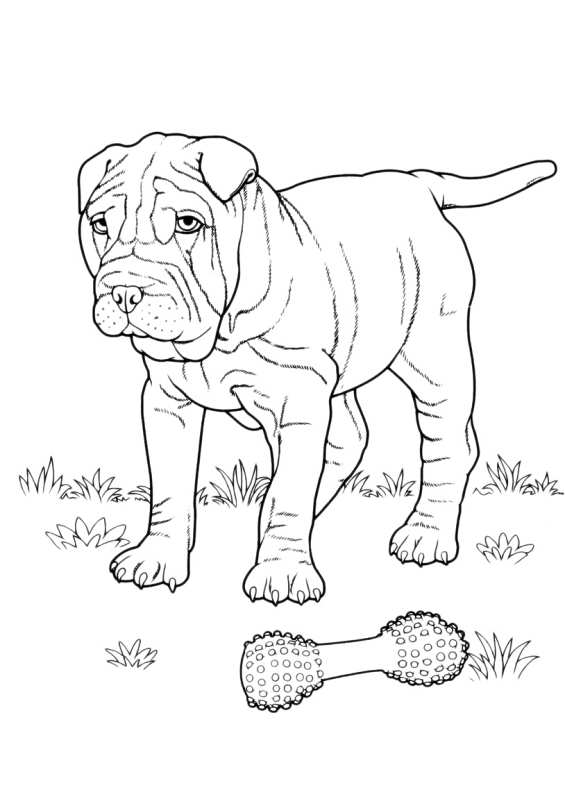 Disegni da colorare di cani for Cane disegno da colorare