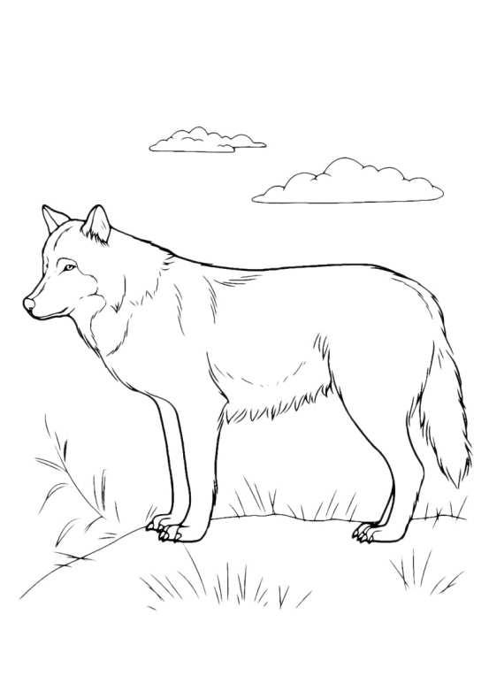 Cani da colorare siberian husky da stampare e colorare for Cani da colorare e da stampare