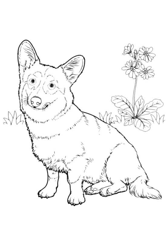 Disegni da colorare di cani - Immagini di animali da stampare gratuitamente ...