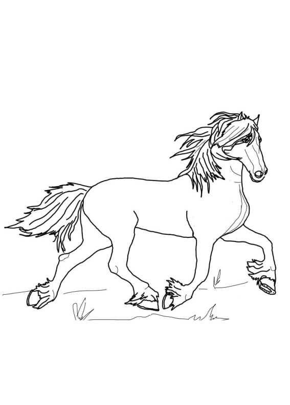 Cavalli Immagini Da Colorare