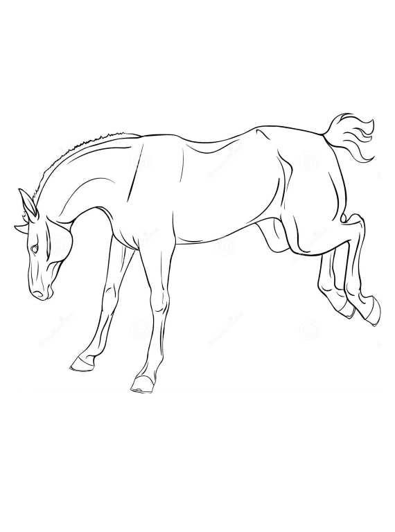 Disegni da colorare di cavalli for Disegno cavallo per bambini