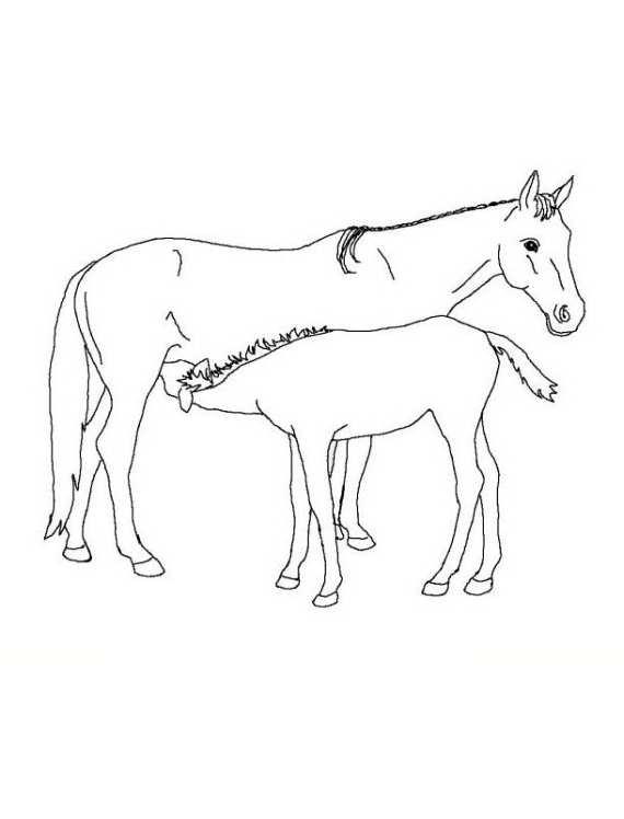 Cavalli da colorare mamma con puledro da stampare e colorare for Immagini di cavalli da colorare