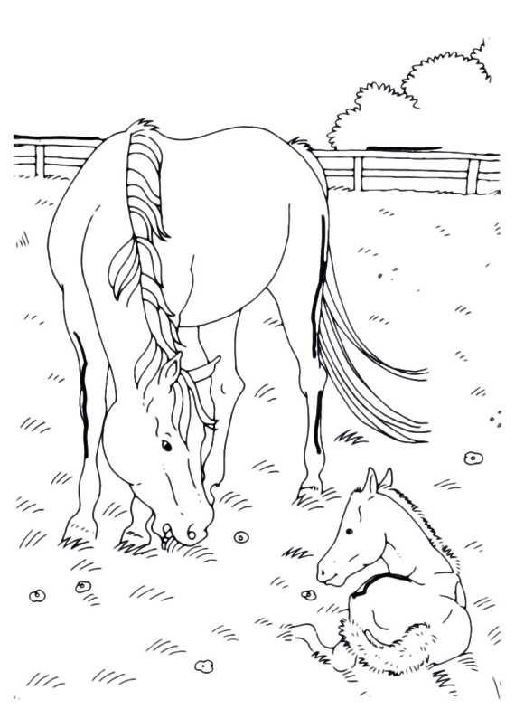 Disegni da colorare di cavalli for Disegni di paesaggi da colorare