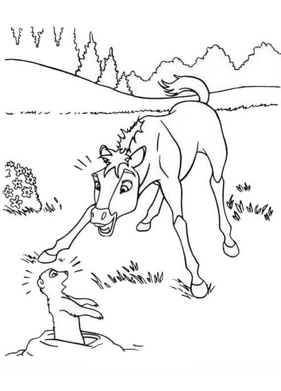 Disegni da colorare di cavalli - Stampare pagine da colorare ...
