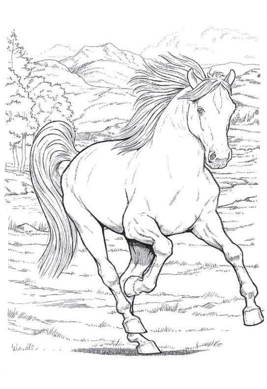 disegni da colorare e stampare di cavalli