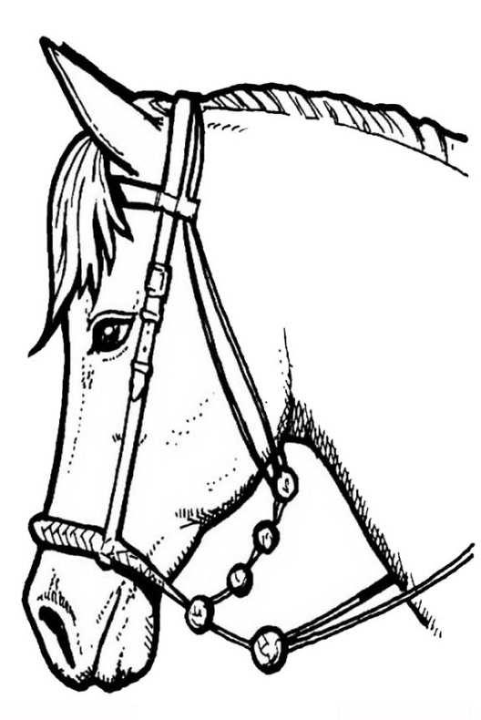 Disegni da colorare di cavalli for Immagini di cavalli da disegnare