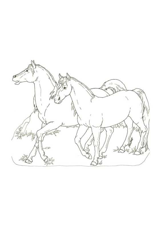 disegni da colorare di cavalli