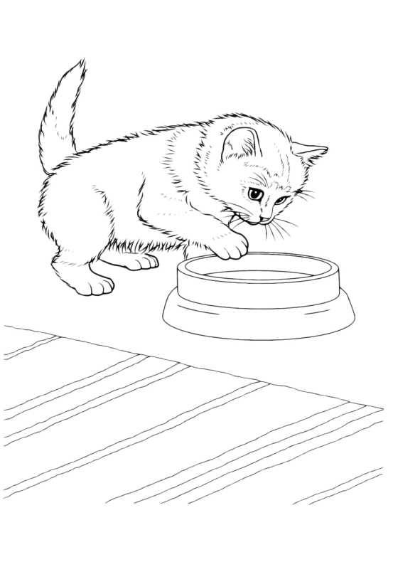 Favorito Gatti Da Colorare Gattino Con Ciotola da stampare e colorare VQ12