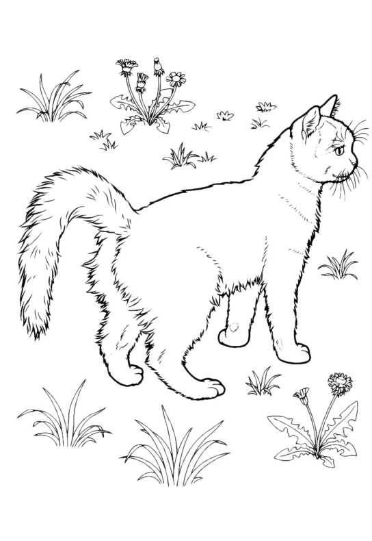 Gatti da colorare gatto nell erba da stampare e colorare for Immagini di gatti da colorare