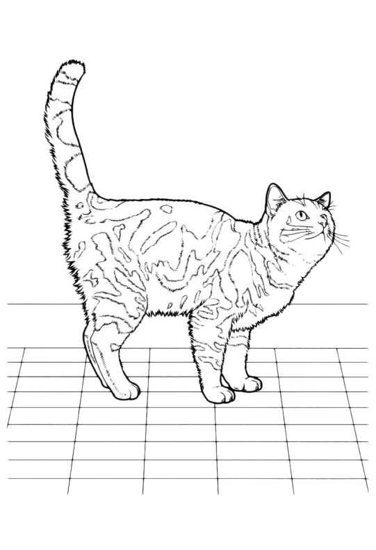 Gatti Da Colorare Gatto Tigrato Da Stampare E Colorare