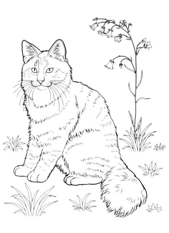 spesso Gatti Da Colorare Gatto Tigrato Pelo Lungo da stampare e colorare TY49