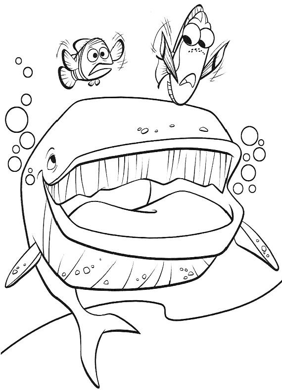 Nemo marlin balena dory da stampare e colorare for Immagini nemo da stampare